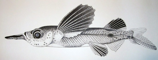 flyingfish-1.jpg