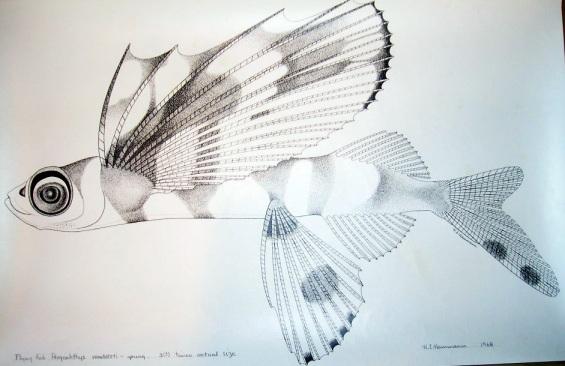 flyingfish-3.jpg